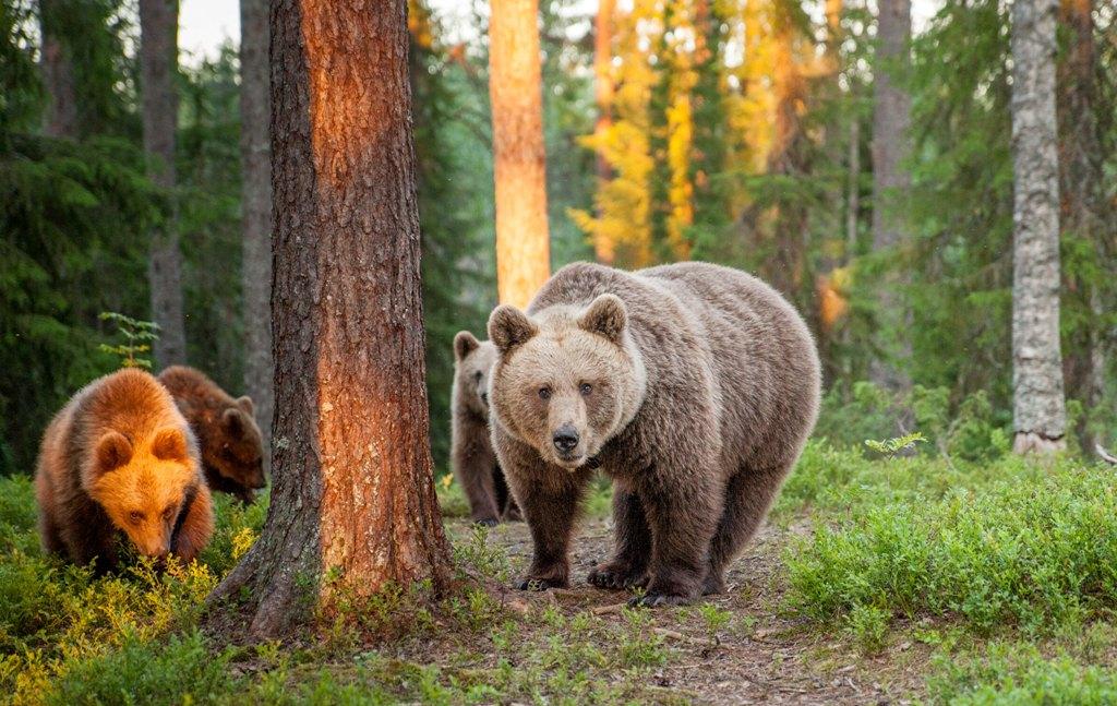 Фото: Visit Finland / George Turner