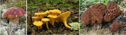 Лесные грибы в Финляндии